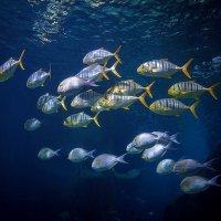 рыбки :: Юрий Кащенко