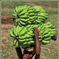 Любителям и сборщикам бананов посвящается :: Евгений Печенин