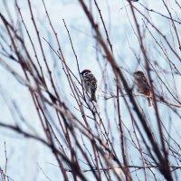 Птички :: Настя Рубан