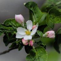 Nature :: Ирина Ицкова