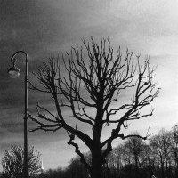 Дерево-фонарь :: Олег Субботин