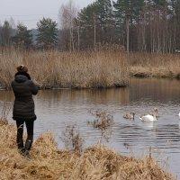 люди и птицы :: Лариса Кайченкова