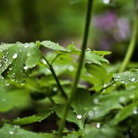 После весеннего дождя :: Татьяна