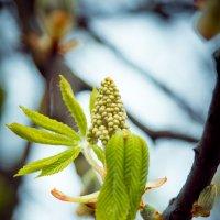 весна :: Юрий Семидоцкий