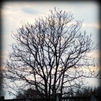 Дерево :: Дмитрий Сопыряев