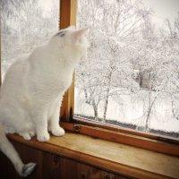 Зима в апреле) :: Анастасия Курганова
