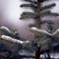 Опять снег :: Artem72 Ilin