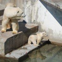 Не бойся, мама рядом! :: Boris Antonov