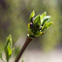 Весна уже не только в душе :) :: Anna Lipatova