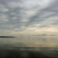 Залив. Утро :: Дмитрий Близнюченко