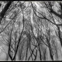 сумрачный лес :: Sergey Bagach