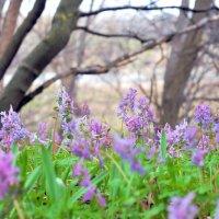 Весна пришла... :: Павел Бутенко