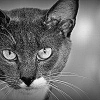 Mr.Cat :: дмитрий атаманюк