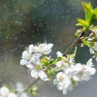 Весна :: Евгений Хаустов
