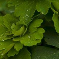 после дождя :: fotomaf photorpher