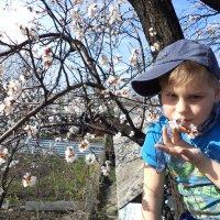 Весна :: Оксана Таран