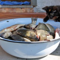 Рыбалка :: Юлия Талалай