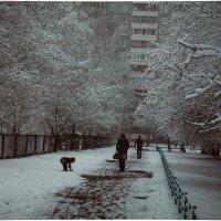 Зимние будни. :: Darya Korobova
