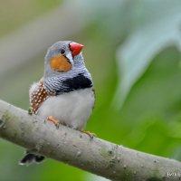 Я готова! Давай, щелкни, пускай еще вылетит красивая птичка! :: Виталий Половинко