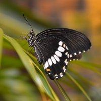 В тропическом раю :: Андрей Вестмит