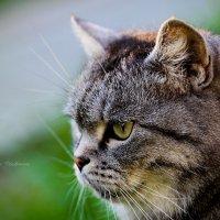 Animals :: Ирина Ицкова