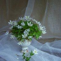 Букетик невесты :: Ирина Приходько