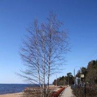 Дорога вдоль побережья :: Aнна Зарубина