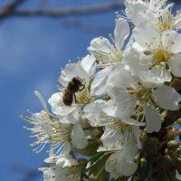 пчелка... :: Просто witamin