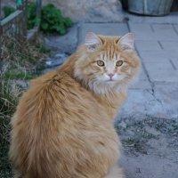 red cat :: Виктория грёZы
