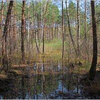 В весеннем лесу. :: Роланд Дубровский