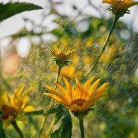 Цветы :: Дмитрий Гришечко