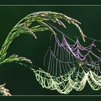Цветные сети паука :: Валерий Талашов