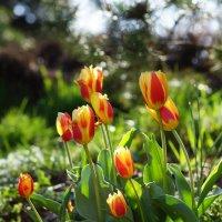Признаки весны :: Алексей Соминский
