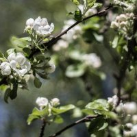цветочки :: Алина Адаменко
