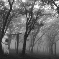 Путь через туман (заменена на более высокое качество) :: Алена Маринц