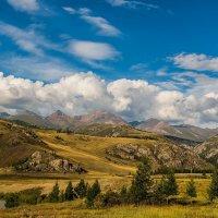 Курайская степь, Горный Алтай :: Дмитрий Кучеров
