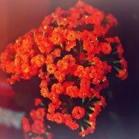 цветы... :: Уля Гафт