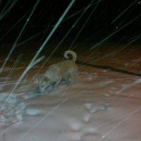 вот так снег!!! :: Ольга Алешко