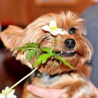 Тоже любит цветы,одно слово-девочка! :: Андрей Куприянов