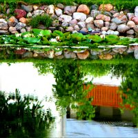 Зеркало воды. :: Ольга Ламзина