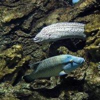 Жизнь кораллового рифа :: Владимир Воробьев
