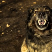 Осторожно, злая собака! :: Николай Мелонов