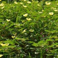полевые цветочки :: Нина Бартоломеу