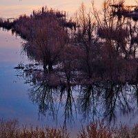 утро на озере :: Арсений Корицкий