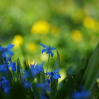 Красотка в голубом :: Алексей Соминский
