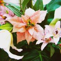 Цветы :: Алексей Шунин