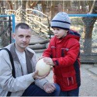Ещё тепленькое ( яйцо страуса) :: Леонид Дудко