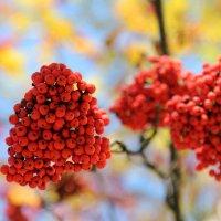 Осенние краски :: Александра Михайлова