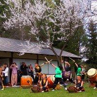 На Празднике цветения сакуры. :: Николай Кондаков