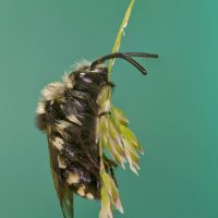 Маленькая пчелка сладко спит :: Александр Земляной